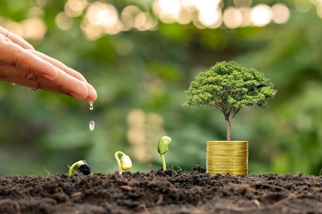 Руки поливают растения, растущие на почве, и монеты среди зеленой природы, размывают финансовую концепцию и прибыль от финансовых вложений