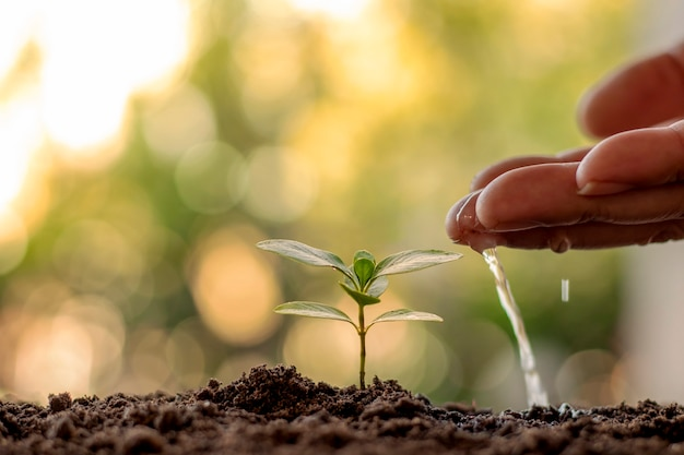 Hands watering seedlings or plant saplings on green background world environment day concept.