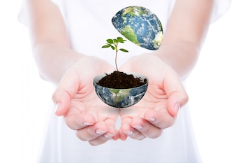Hands with a world and a plant