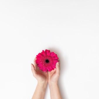 ピンクの花と手