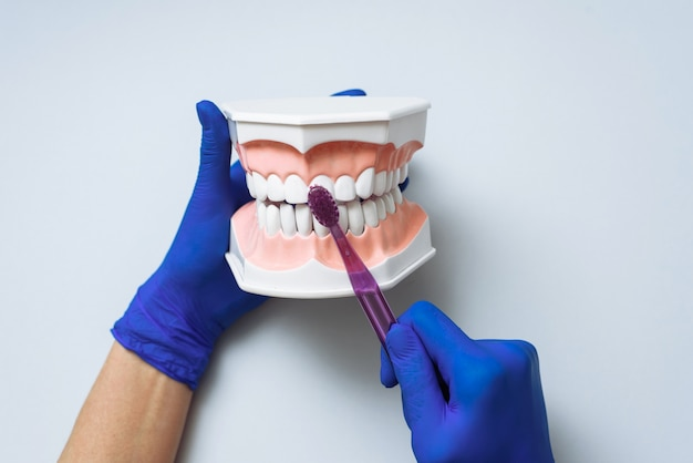Hands with sterile gloves using a toothbrush on an artificial jaw