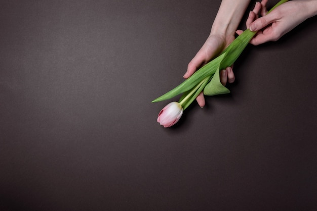 Hands with tulips. the concept of laying flowers to fallen heroes
