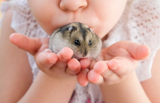 Hands with with a hamster. girl holds a hamster in her hands.