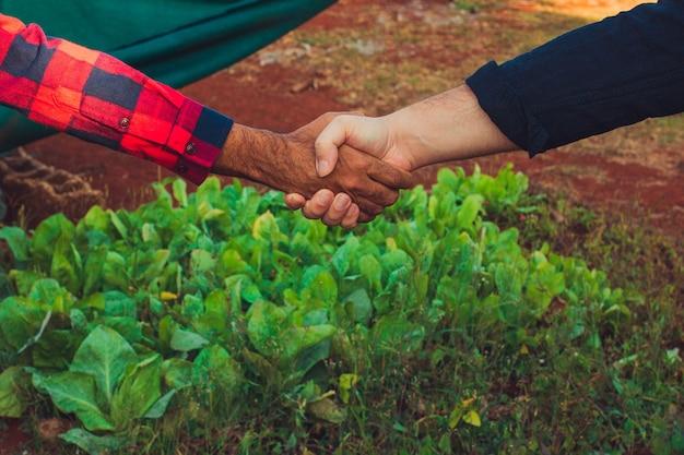 Handshake between farmer and customer, vegetable garden