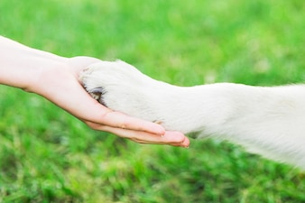 Handshake with dog. Dog's paw in female's hand. Dog with owner in the park