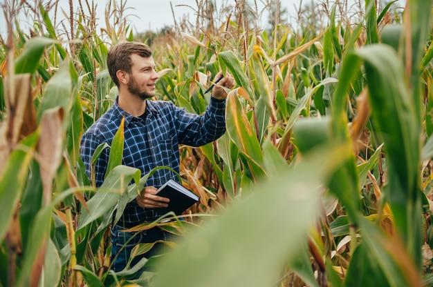 잘 생긴 농업 경제학자는 옥수수 밭에서 태블릿 터치 패드 컴퓨터를 보유하고 수확하기 전에 작물을 검사합니다.