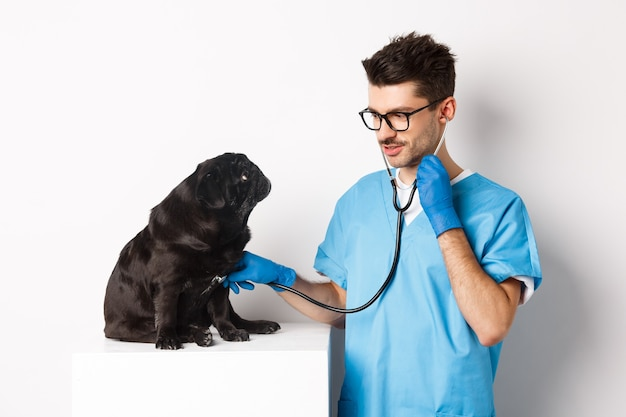 Handsome doctor veterinarian smiling, examining pet in vet clinic, checking pug dog with stethoscope, standing over white.