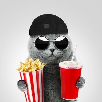 빈티지 둥근 선글라스와 모자를 쓴 잘생긴 우스꽝스러운 힙스터 고양이가 영화관에서 팝콘과 음료를 들고 있습니다. 휴식 개념