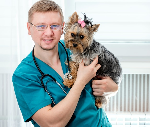 Handsome male doctor veterinarian at clinic is holding little dog yorkshire terrier on hands and smiling