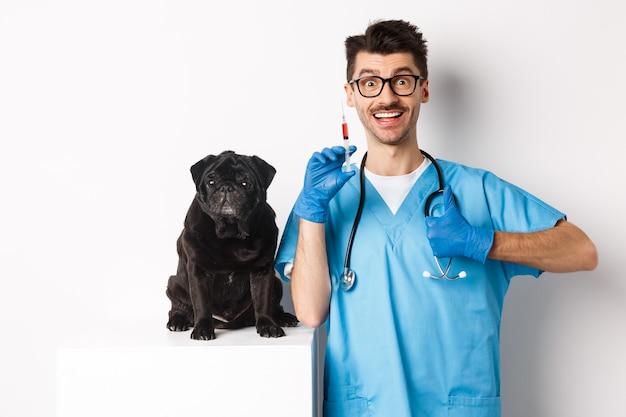 注射器を保持し、かわいい黒いパグ、予防接種犬、白い背景の近くに立っているハンサムな男性医師の獣医。