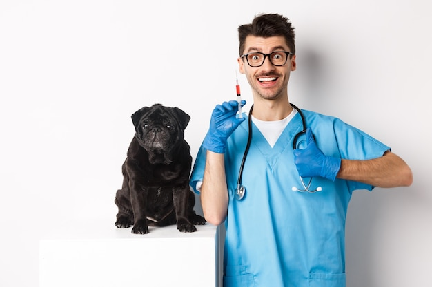 Handsome male doctor veterinarian holding syringe and standing near cute black pug, vaccinating dog, white.