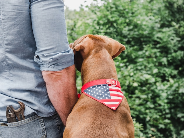 Handsome man, adorable puppy and american flag. view from the back, close-up.