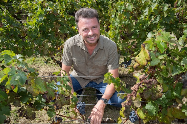 Handsome man in his vineyard picking grapes