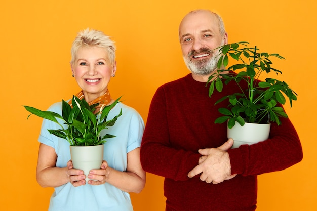 Handsome senior male growing decorative house plants together with his beautiful wife, setting green flowers into new pots. beauty, nature, botany, gardening, care, freshness and people concept