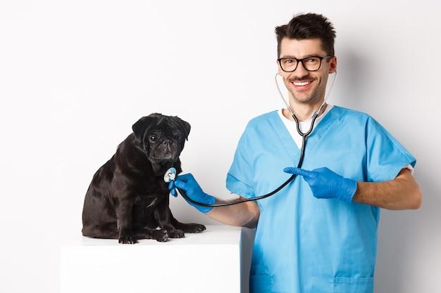 Bello veterinario presso la clinica veterinaria che esamina un simpatico cane carlino nero, puntando il dito contro l'animale domestico durante il check-up con lo stetoscopio, sfondo bianco.