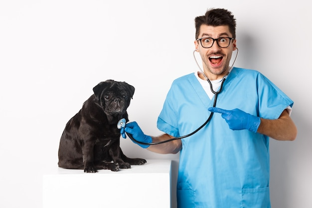 Handsome veterinarian at vet clinic examining cute black pug dog, pointing finger at pet during check-up with stethoscope, white.