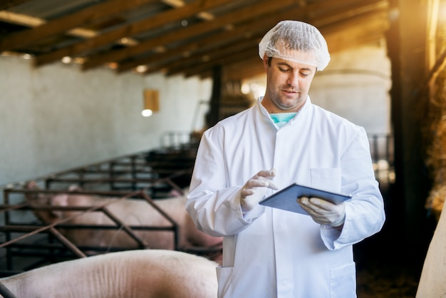 Handsome veterinary standing in the pigsty with a tablet in hand.
