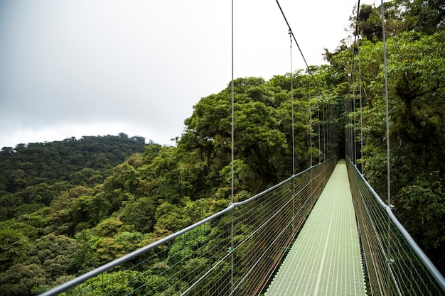 Hanging bridge in rainforest at costa rica
