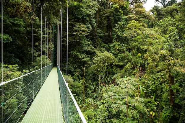Hanging bridges in green rainforest at costa rica