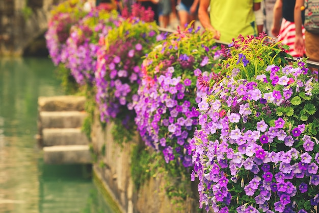 Hanging flower basket with petunia flowers on the street in summer  urban decor.