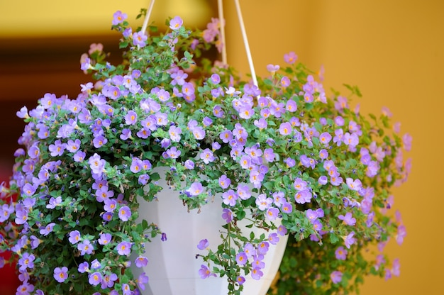 Hanging flowers at the entrance to the restaurant