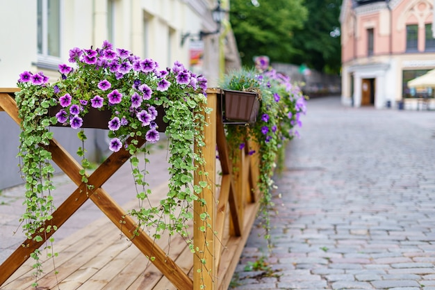 Hanging flowers on wooden fence within the city.