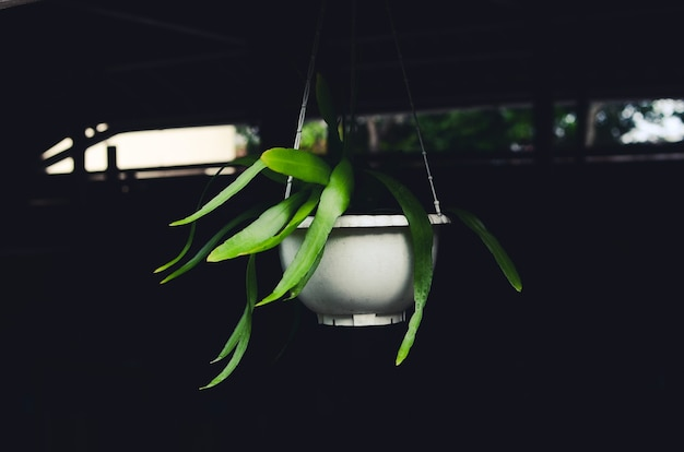 Hanging ornamental plants for coffee shop decoration
