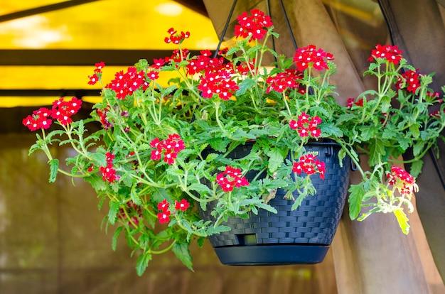 Подвесные горшки с ампельными цветами дизайн садовых домиков студия фото