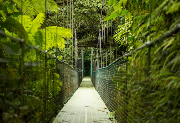 Hanging suspension bridge in tropical rainforest