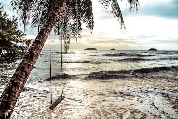 Hanging a swing on a palm tree by the sea