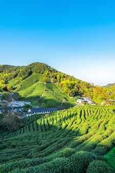 Ханчжоу западное озеро чайная гора лунцзин