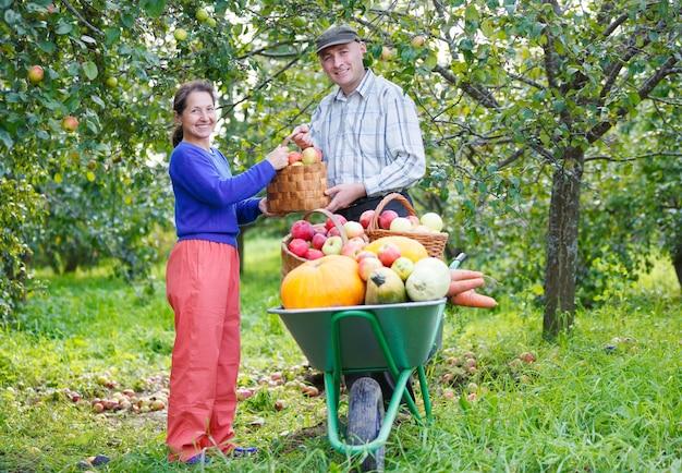 행복 한 성인 남자와 여자 야외 정원에서 수확