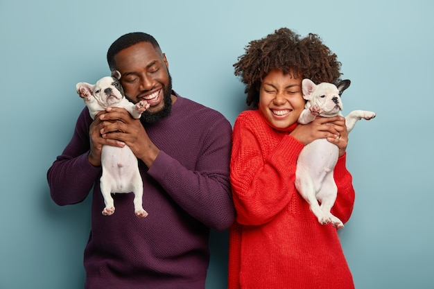 Happy afro american lady and man pose with pleasure, hold two little puppies, like spending time with dogs, smile positively, isolated over blue wall. family, happiness, animals concept