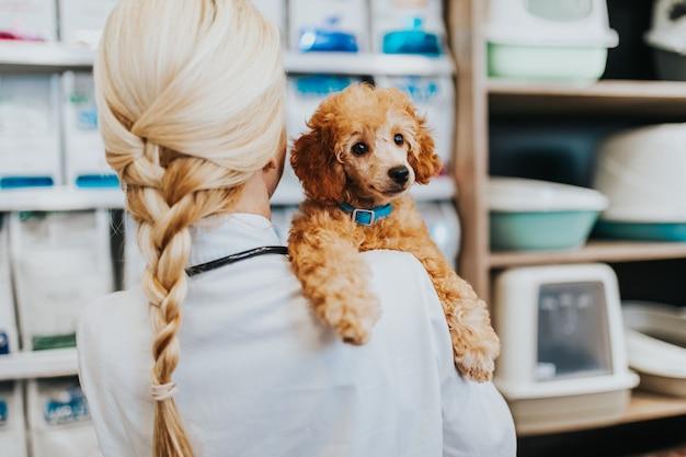 행복하고 웃는 중년 수의사 여성이 애완동물 가게에 서서 카메라를 보면서 귀여운 미니어처 레드 푸들을 들고 있습니다.