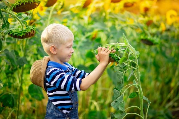 Счастливый ребенок мальчик блондинка сидит в поле с подсолнухами летом, детский образ жизни