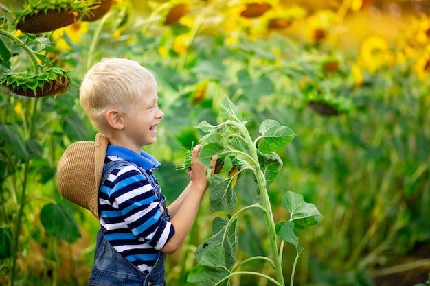 Счастливый ребенок мальчик блондинка сидит в поле с подсолнухами летом