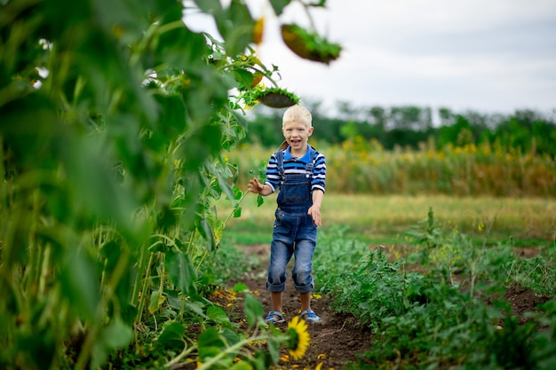 Happy baby boy running through a field with sunflowers in summer