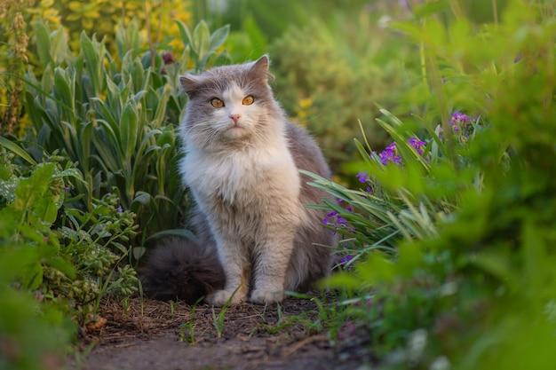 Happy beautiful cat stands in the garden