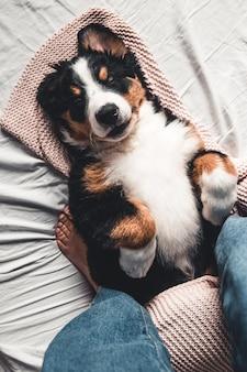 ベッド付きの豪華な明るい色のスカンジナビアスタイルのベッドルームで幸せなバーニーズマウンテンドッグ犬。ペットフレンドリーなホテルまたはホームルーム。