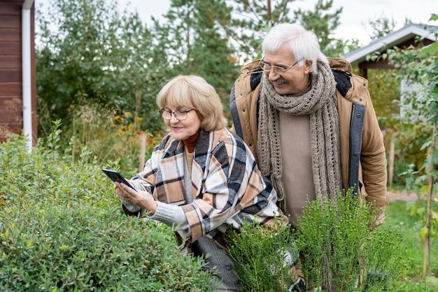스마트폰으로 녹색 덤불 중 하나를 구부리는 행복한 금발 노년 여성이 옆에 서 있는 남편과 함께 사진을 찍는 동안