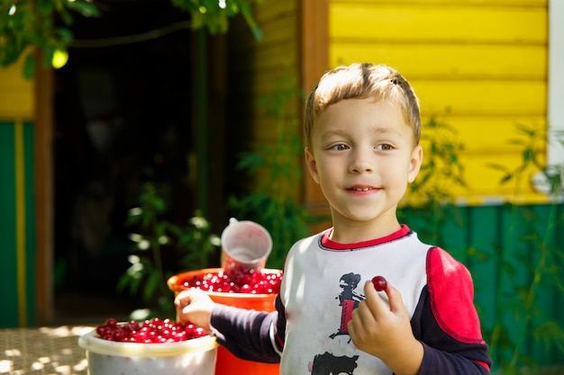 Happy boy eats freshly picked cherries