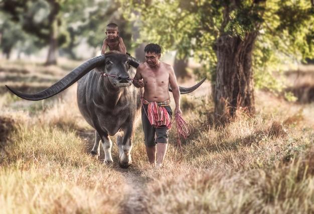 Счастливый мальчик езда буйвола.