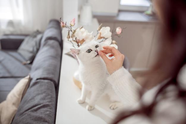 행복한 고양이. 주인이 그를 애무하는 동안 행복해 보이는 귀여운 솜털 흰 고양이