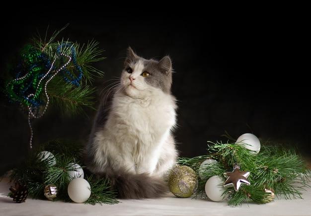 クリスマスのおもちゃと花輪で幸せなお祝い。猫とクリスマスの飾り。