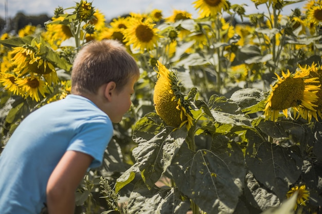 青い空のバックに対して緑の春のフィールドで楽しんでいるひまわり屋外の子供と遊ぶ幸せな子供