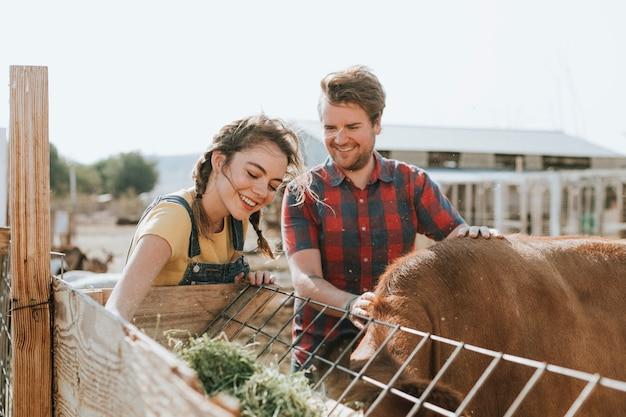 Happy couple feeding cow