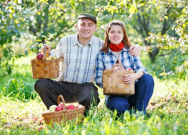 庭でリンゴの幸せなカップルの収穫