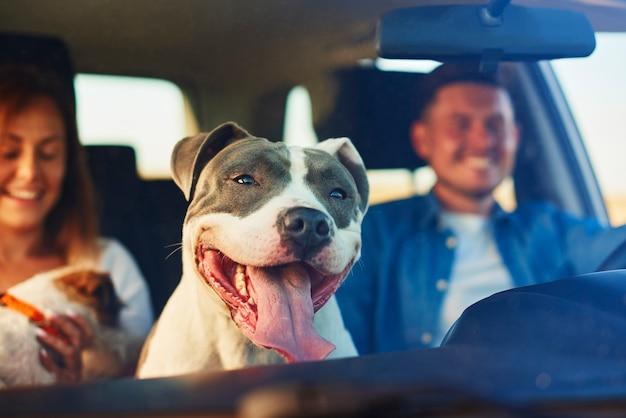 車の乗客として幸せな犬