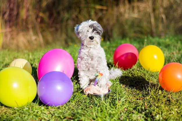 Happy dog celebrating his birthday