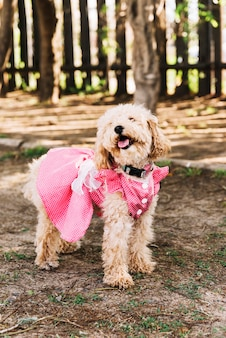 Happy dog having fun in the park